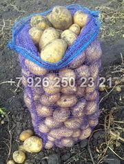 Овощи оптом от производителя. Картофель,  морковь и другое.