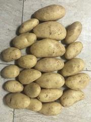 Картофель Калибр 5  Сорт «Спунта»,  Страна происхождения Египет.