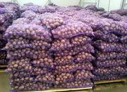 Картофель оптом 5+ от производителя/от 7, 5р/кг