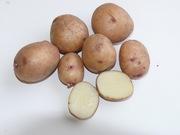 Продажа  семенного картофеля от производителя