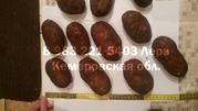 Картофель Ред Скарлет 6+ от 8, 00 руб/кг