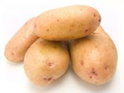 Картофель сорта Ривьера