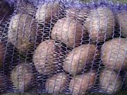 Оптовые поставки,  свежего,  вкусного,  картофеля. Супер цены!