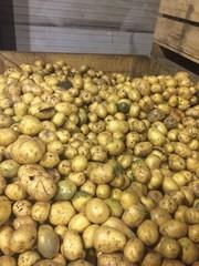 Мытый картофель Гала и Бонус на переработку