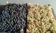 Виноград из Армении от производителя