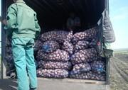 Оптовый склад реализует картофель по оптовым ценам